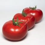 Семена красного индетерминантного томата KS 301 F1,  KITANO SEEDS