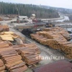 Предлагаю лес и пиломатериалы из ангарской сосны и лиственницы