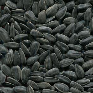 Закупаем семена подсолнуха